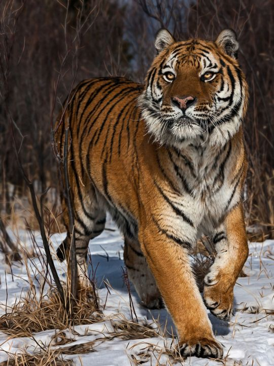 On the Prowl - Paul Keates
