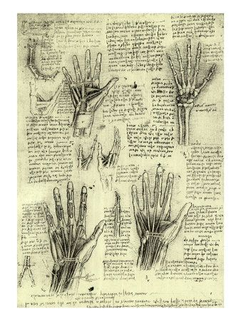 Functions of the Human Hand *DA VINCI