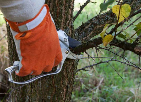 The 12 Fall Home Maintenance Tasks You Can T Ignore Tree Pruning