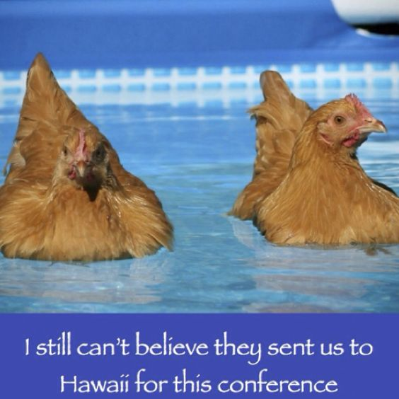 Pinterest the world s catalog of ideas for Swimming chicken
