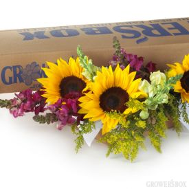 Fall Flowers Made Easy - That is what we should call this box of Sunflowers, Snapdragons and Solidago. These charming wholesale flowers can easily be used as wedding flowers or event decorations. The contrasting yellow sunflowers and solidago with fall-colored snapdragons make this package of bulk flowers ideal for ANY fall occasion!