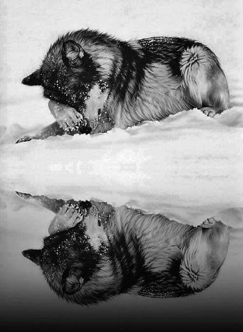 """Wolves are the personification of the wild. They are the pathfinders - intuitive, intelligent and hungry for freedom."" ~ Visionary Ink."