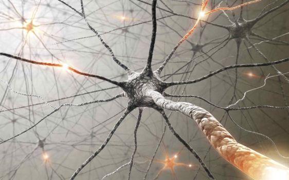 Notre vécu change l'anatomie du cerveau - Islamiates