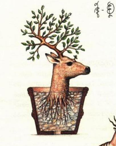 Codex Seraphinianus - encyclopaedia of an imaginary universe...creative genius