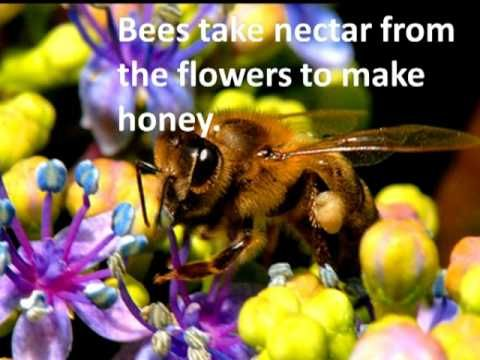 The Amazing Honey Bees And Ojays On Pinterest