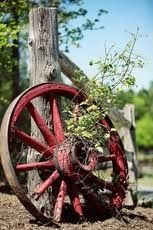 Old iron wheel against stump in garden ideas-for-the-yard