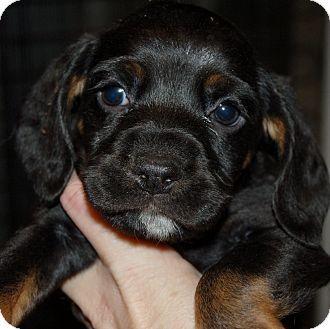 Adopt Dog Slc