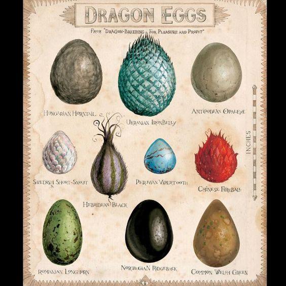 Dragon Eggs Philosopher's Stone illustrations Jim Kay