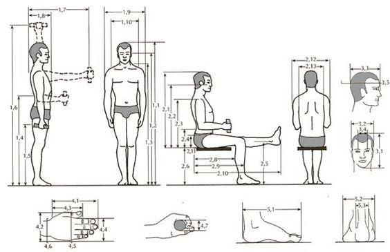 Antropometria: necessidade de constantes investigações para a efetiva contribuição na área da Ergonomia