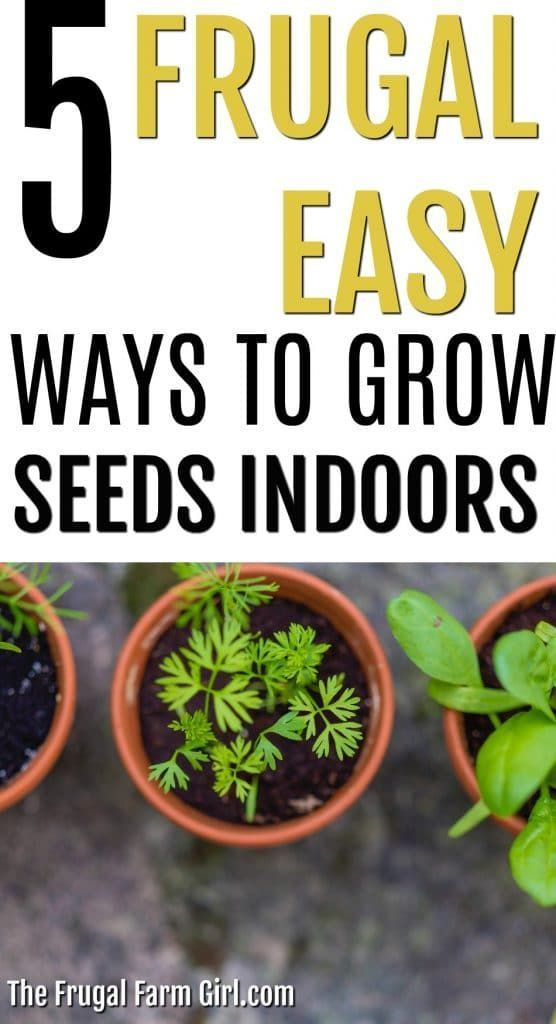 5 Cheap Ways To Grow Seeds Indoors Growing Seeds Hydroponic