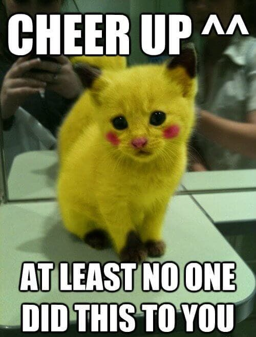 Pin By Barbie Wesolowski On Cute Animal Memes Cute Animals Cuddly Animals Cute Animal Memes