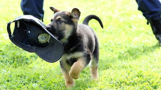 #police #military #dogs