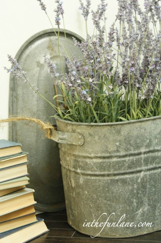 lavender planted in an old tub - awesome: