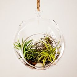 An easy and fun air plant terrarium tutorial!