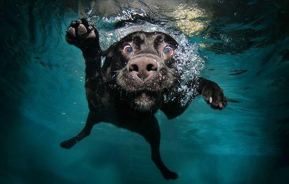 Um dia de cão de dar inveja! http://comunicadores.info/2012/02/15/um-dia-de-cao-de-dar-inveja/