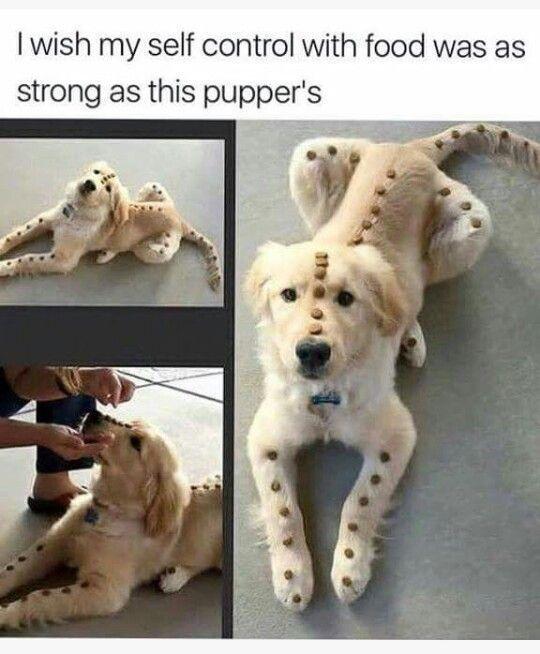 Hilarious Meme Images Animals Memes Funny Pictures Funny Memes Ironic Life Memes Funny Animal Memes Animal Memes Cute Animals