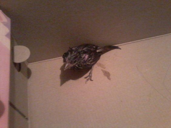 infelizmente ele caiu do ninho e não resistiu