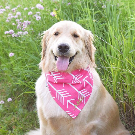 Pink Arrows PupDana from @threespoileddogs etsy shop Use code Addie10 to save 10% on all purchases