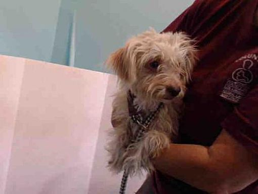 Baldwin Park Ca Terrier Small Medium Meet Gandaya A Dog For