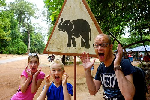 Elephants crossing the road! Watch out!