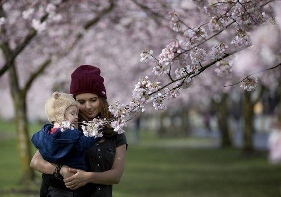 cherry blossom rain - Google 検索