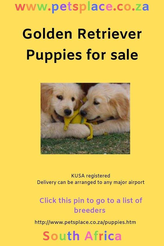 Golden Retriever Puppies Are A Delightful Addition To A Family The Are Big Dogs Though And Need Space Golden Retriever