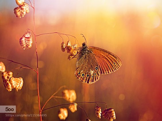 butterfly..... by pomian3 #nature
