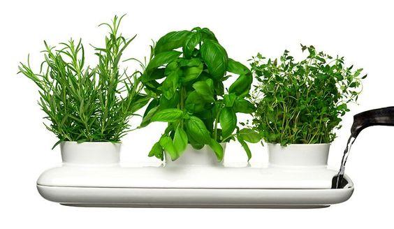 Kräutertopf Trio für seitliches Begießen - Cleveres Design für Zimmerpflanzen 3 - [SCHÖNER WOHNEN]