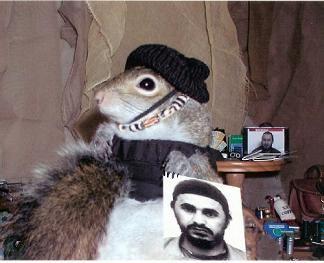 sugarbush squirrel | Check Out This Site: Sugar Bush Squirrel : Diggers Realm