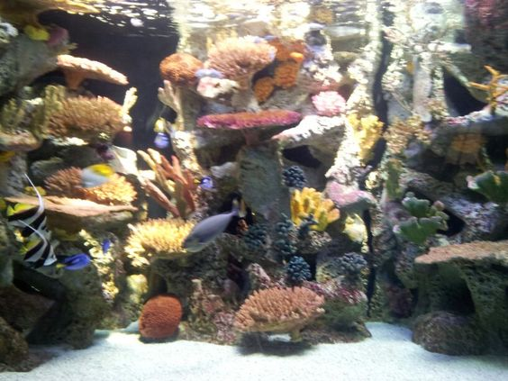 Colorful fishies part 2