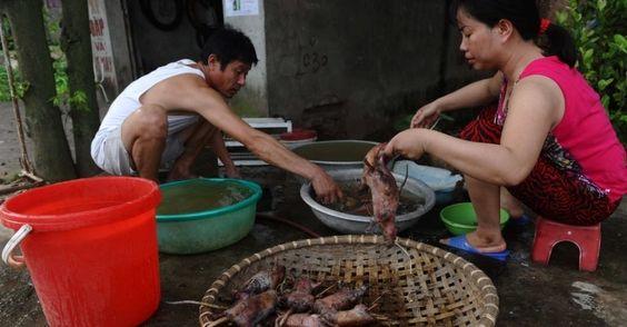 Foto tirada em agosto de 2013 e divulga nesta terça-feira (4) mostra vendedores preparando ratos assados para a venda em um mercado da vila em um mercado de aldeia em Dan Phuong nos arredores de Hanoi, Vietnã. Comer ratos é comum na região e agricultores aproveitam a época da colheita do arroz, considerada a melhor para caçá-los. Um quilo de carne de rato custa em torno de 100.000 dong, o equivalente a 4 ou 5 dólares