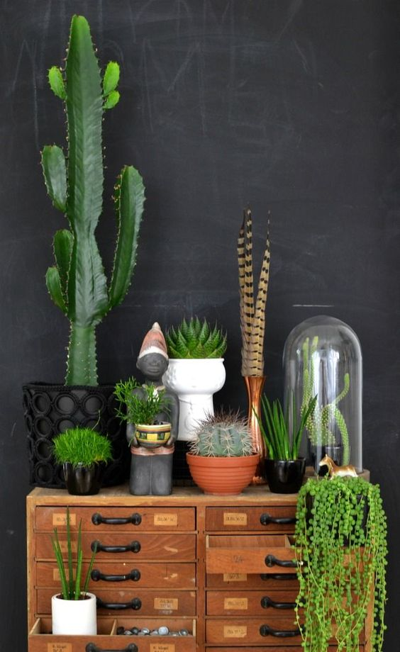 Remarquez bien cette plante, directement dans le tiroir!