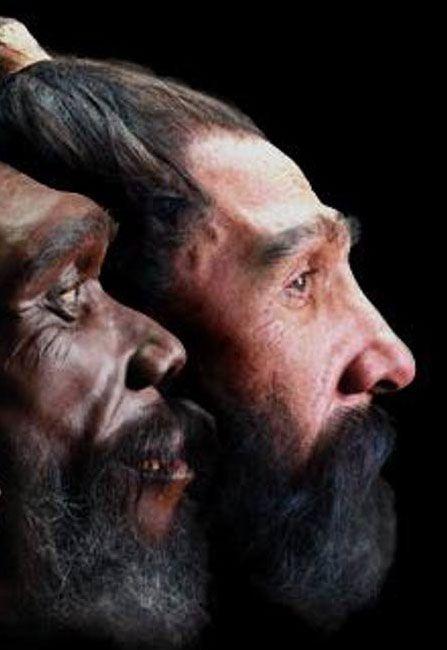 Human skin pigmentation processes