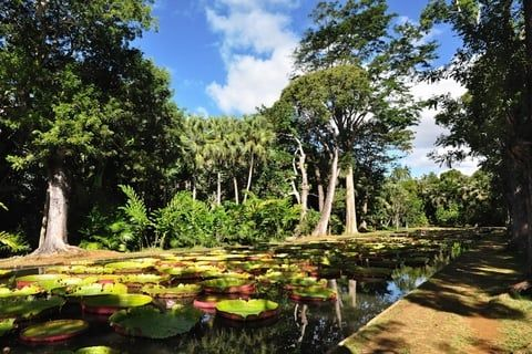 Jardin Pamplemousse Mauritius Places To See Outdoor