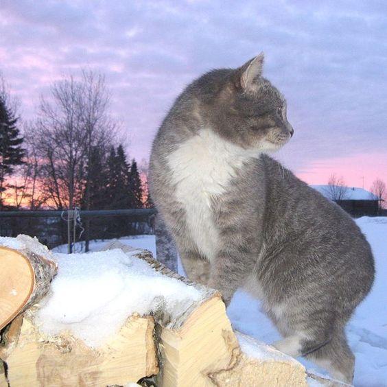 «#Усть_Куломский район. Фото Любови Лютоевой #march #cat #village»