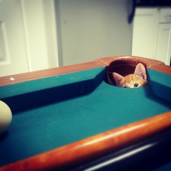 8 ball in the corner pocket...