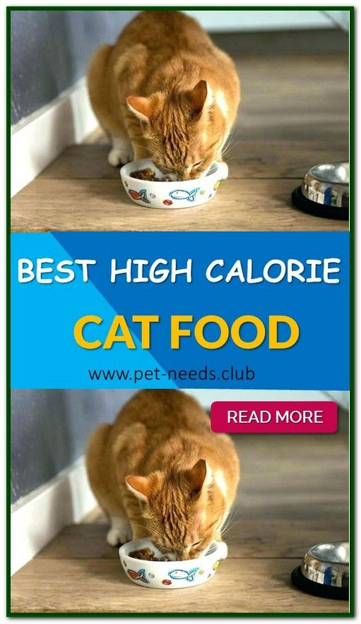 The Best Kitten Food 2020 Your Cats Will Enjoy