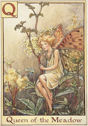 Queen of the Meadow Fairy from the Flower Fairy Alphabet by Cicely Mary Barker