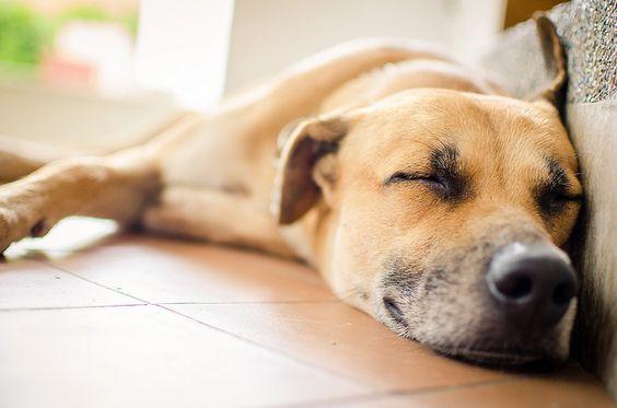 Alerte canicule : 5 conseils pour protéger son chien de la chaleur - Entretenir son chien - Wamiz