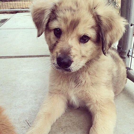 puppies at an animal shelter -