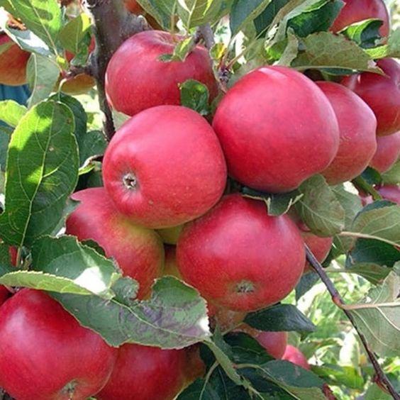 10 loại thực phẩm giúp bạn không còn táo bón và tiêu chảy