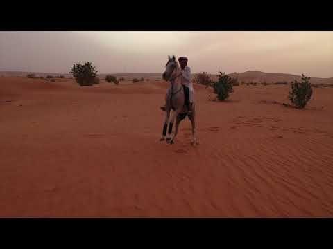 مشاهد للمونتاج استعراض خيال مبارك المصارير Hd Youtube