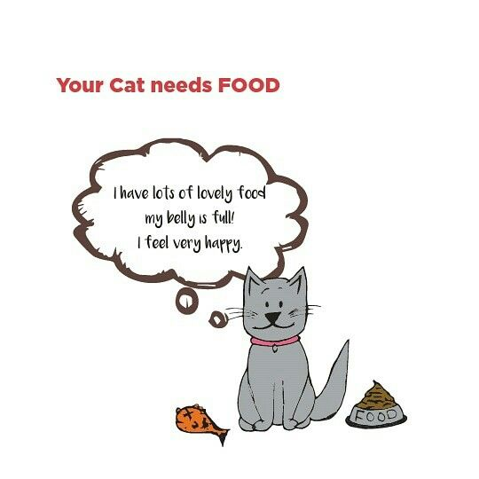 Cats Need Different Foods At Different Stages Of Their Life Kittens Kittens Have Small Stomachs And High Energy So Feeding Kittens Pregnant Cat Cat Feeding
