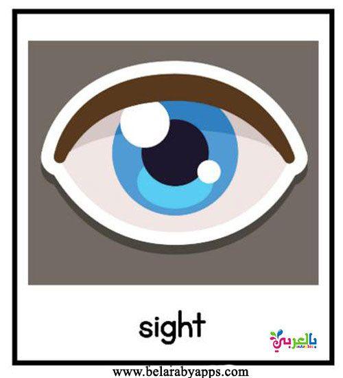 بطاقات تعليم الأطفال الحواس الخمس بالانجليزي وسيله تعليميه عن الحواس بالعربي نتعلم Tech Logos School Logos Georgia Tech Logo