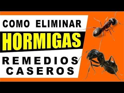 Como Acabar Con Las Hormigas En Mi Cocina Como Eliminar Las Cucarachas Y Hormigas Utilizando Cebolla Y