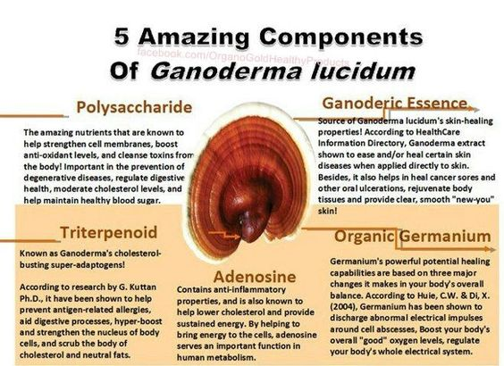 Some more amazing facts about Ganoderm Lucidum. At Organo Gold, our Gandoderm Lucidum is organically grown at privately owned Organo Gold factories. No shipping of the herb from another farmer, strictly grown by Organo Gold and fused within our suite of products. Live Your Dreams with ORGANO GOLD! FREE CoFFee and OpPoRtuNiTy!!!! JOIN US! CALL/TEXT: (02)9558407/(0918)2711392