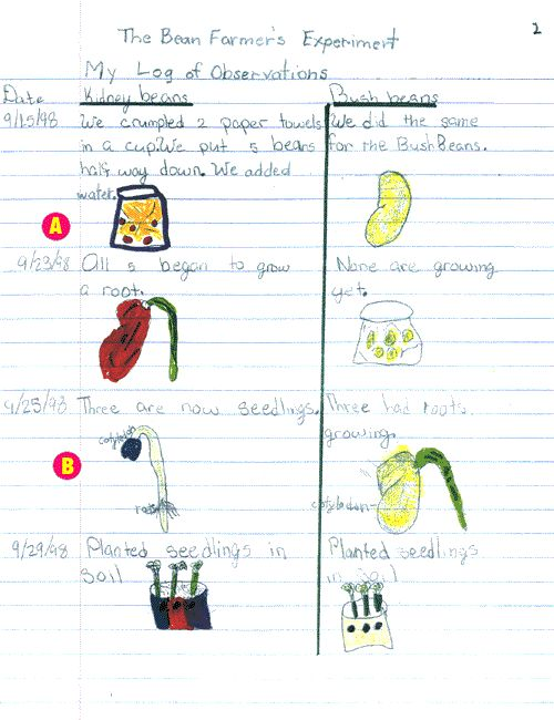 seed germination experiment essay Free essays crushed garlic on seeds germination and growth biology essay  seed germination  by the terminal of the experiment one more seed germinated in.