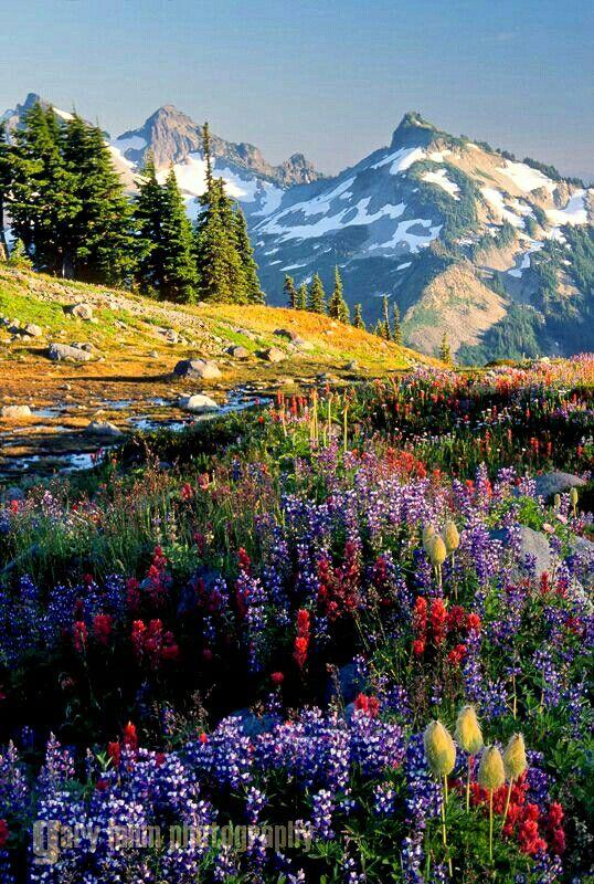 Mount Rainier National Park Washington Beautiful Landscapes National Parks Beautiful Nature