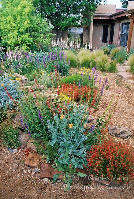 Pinterest the world s catalog of ideas for Southwest landscaping plants