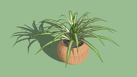 Large preview of 3D Model of Varigated plant